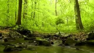 مراحل الخطية وخطواتها-القديس اغسطينوس